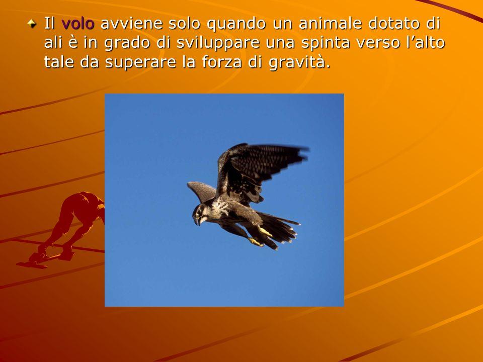 Il volo avviene solo quando un animale dotato di ali è in grado di sviluppare una spinta verso l'alto tale da superare la forza di gravità.