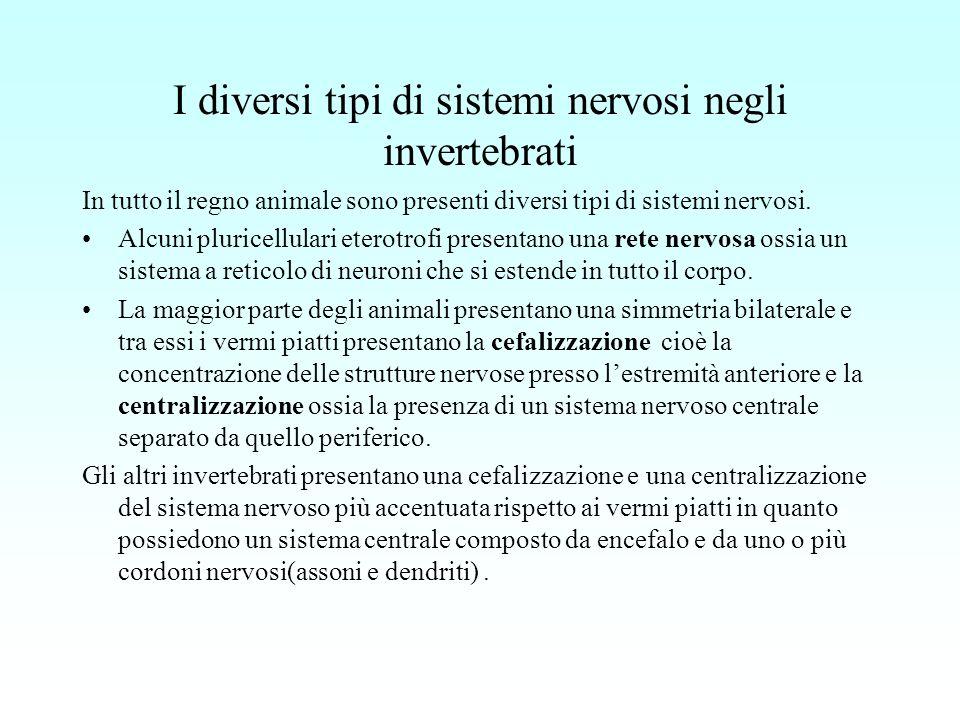 I diversi tipi di sistemi nervosi negli invertebrati