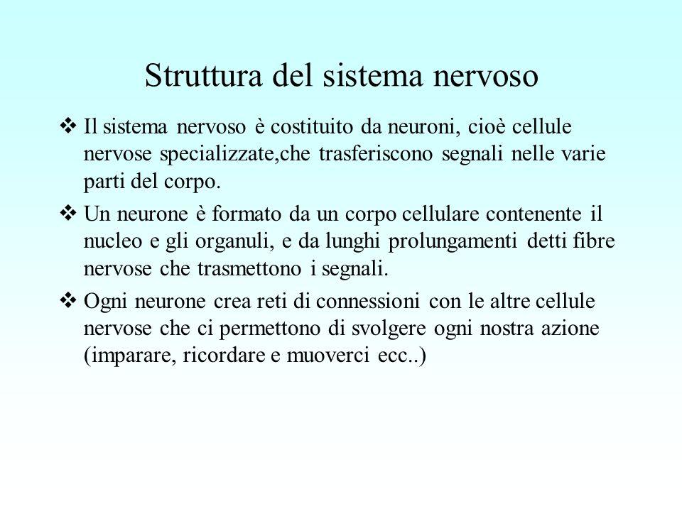 Struttura del sistema nervoso