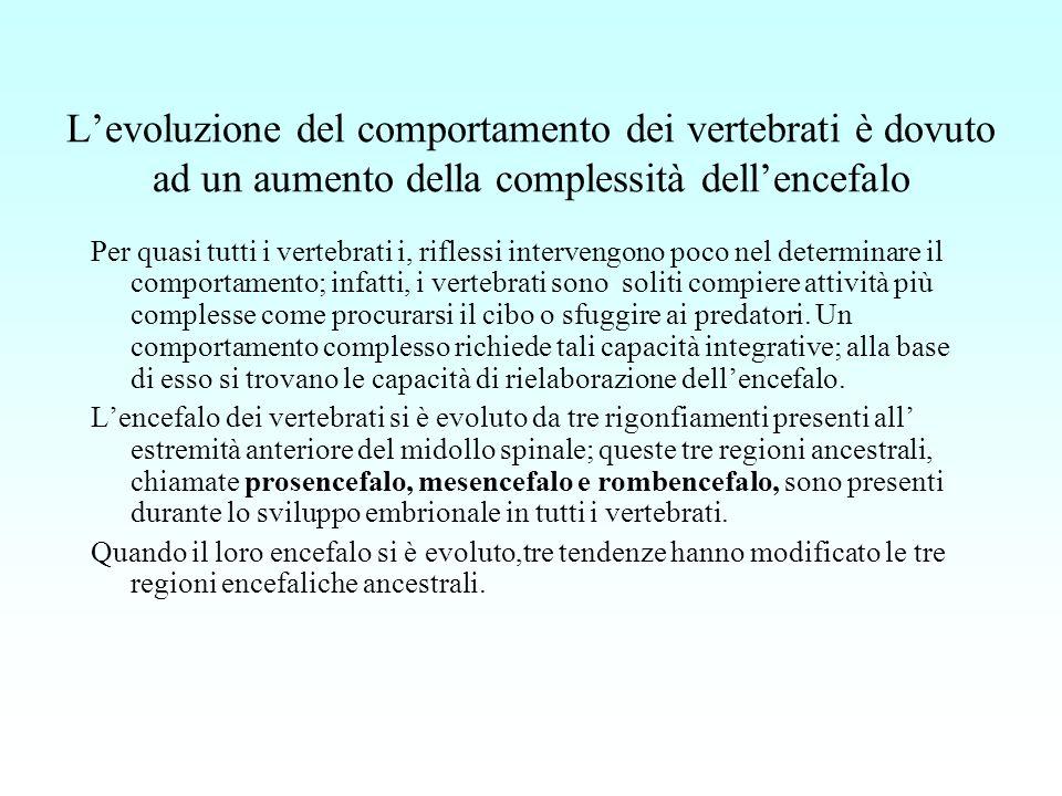 L'evoluzione del comportamento dei vertebrati è dovuto ad un aumento della complessità dell'encefalo