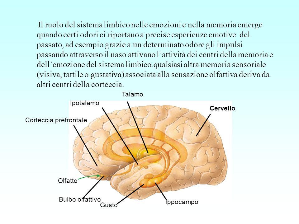 Il ruolo del sistema limbico nelle emozioni e nella memoria emerge quando certi odori ci riportano a precise esperienze emotive del passato, ad esempio grazie a un determinato odore gli impulsi passando attraverso il naso attivano l'attività dei centri della memoria e dell'emozione del sistema limbico.qualsiasi altra memoria sensoriale (visiva, tattile o gustativa) associata alla sensazione olfattiva deriva da altri centri della corteccia.