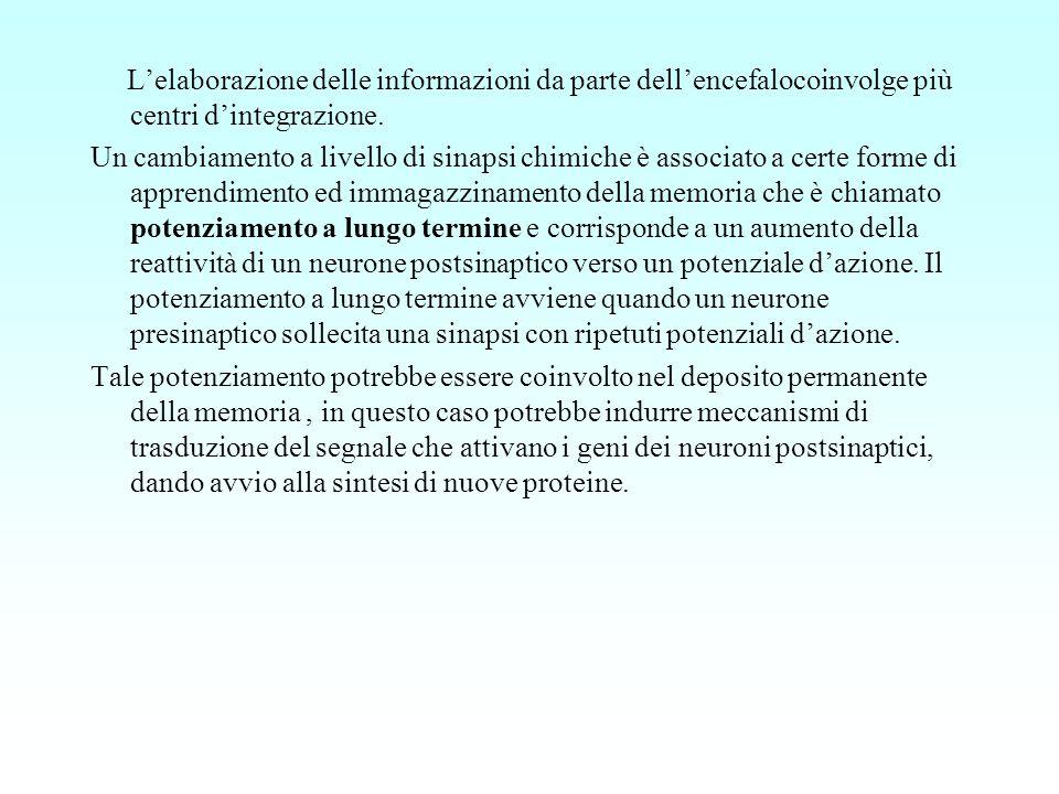 L'elaborazione delle informazioni da parte dell'encefalocoinvolge più centri d'integrazione.