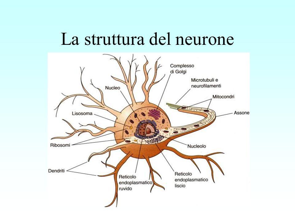 La struttura del neurone