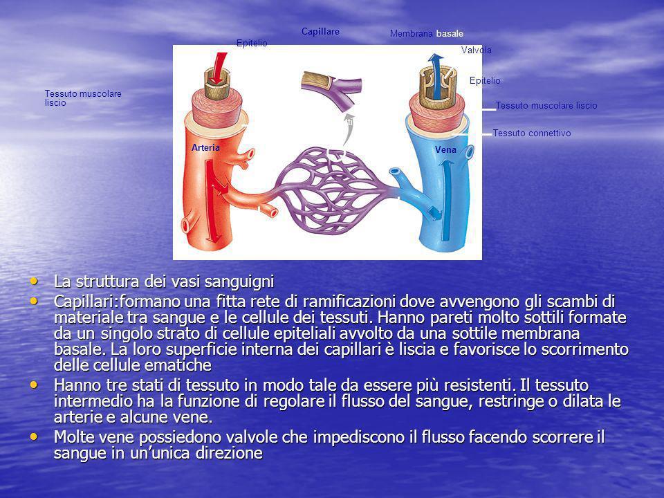La struttura dei vasi sanguigni