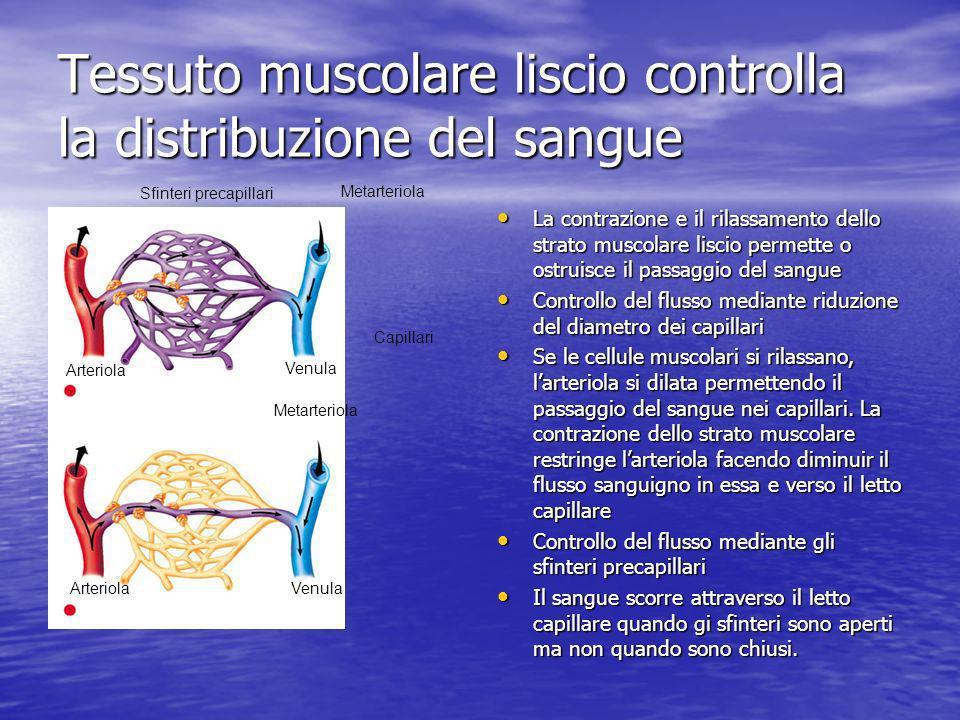 Tessuto muscolare liscio controlla la distribuzione del sangue