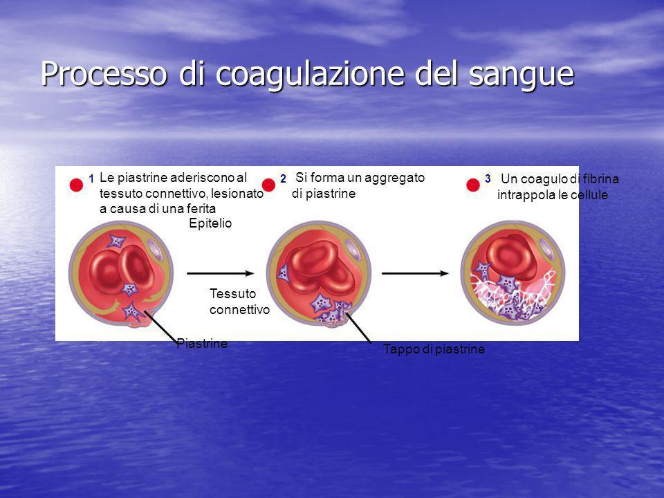 Processo di coagulazione del sangue