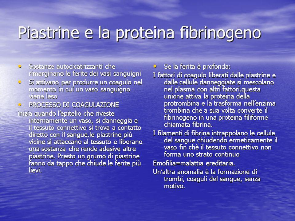 Piastrine e la proteina fibrinogeno