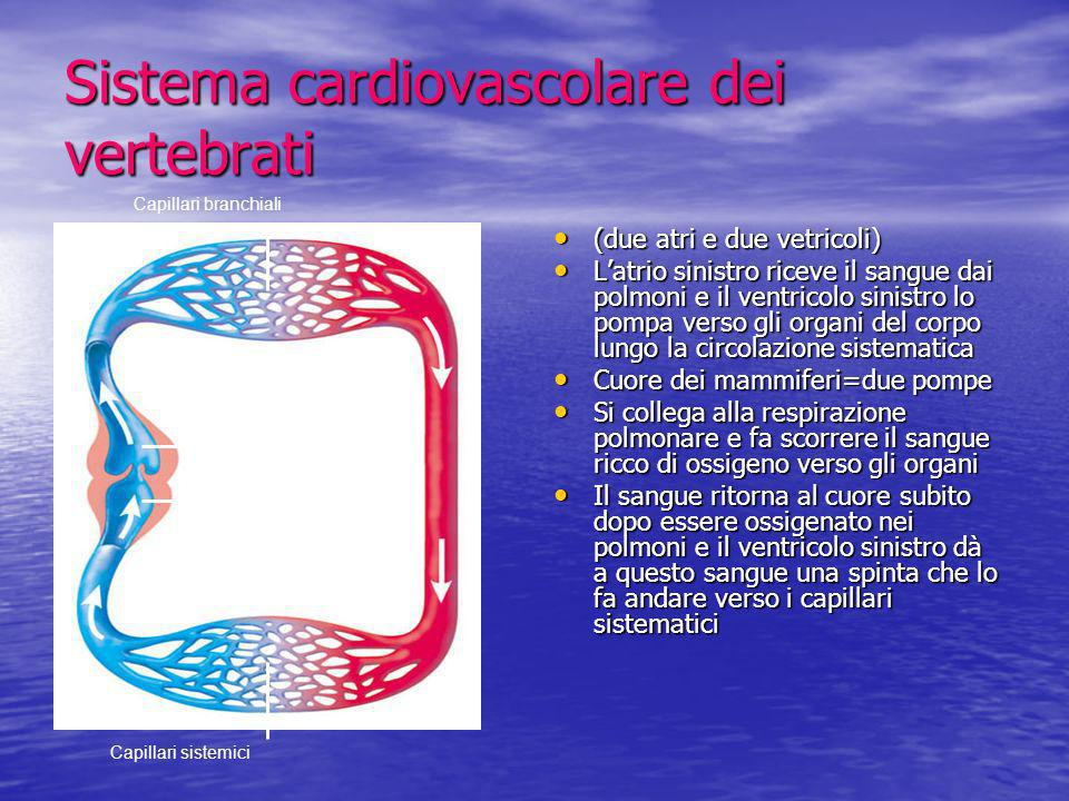 Sistema cardiovascolare dei vertebrati