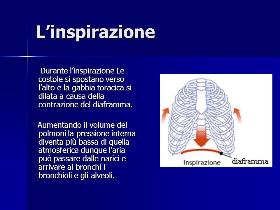 L'inspirazioneDurante l'inspirazione Le costole si spostano verso l'alto e la gabbia toracica si dilata a causa della contrazione del diaframma.