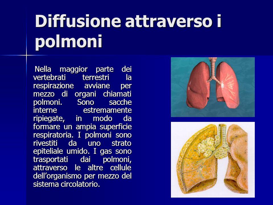 Diffusione attraverso i polmoni