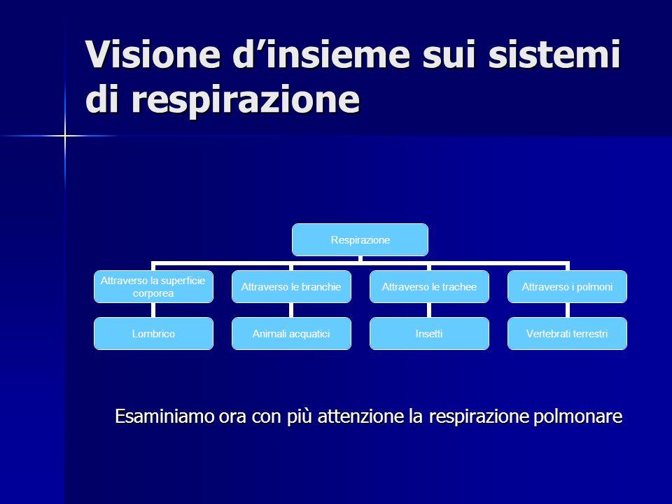Visione d'insieme sui sistemi di respirazione