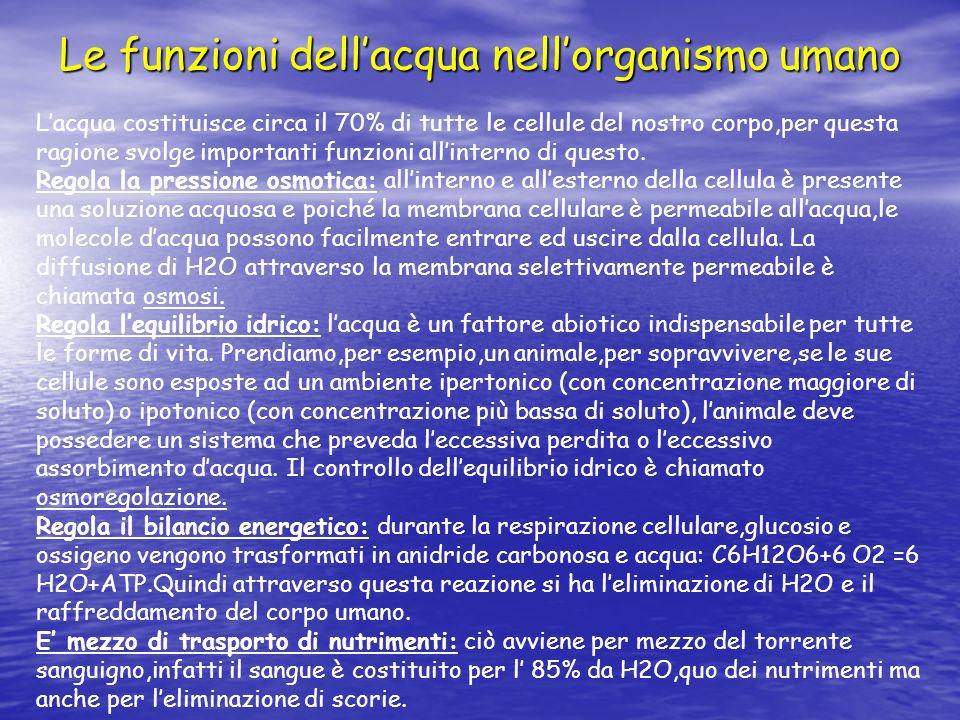 Le funzioni dell'acqua nell'organismo umano