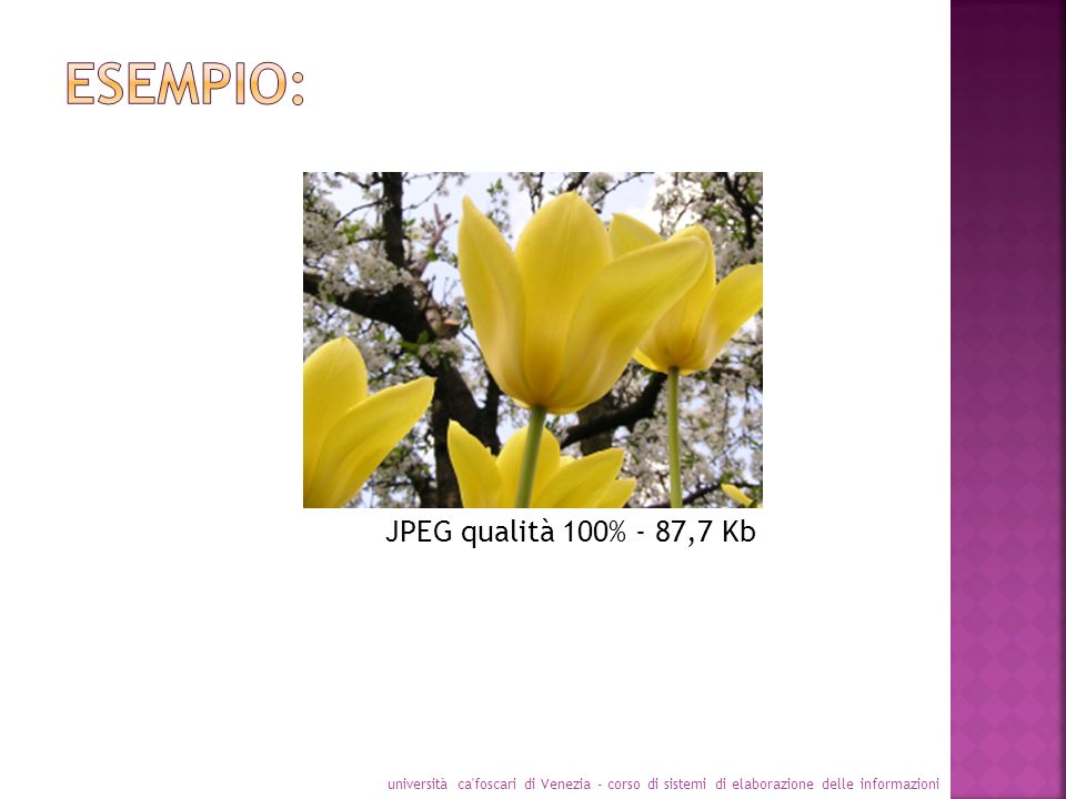 Esempio: JPEG qualità 100% - 87,7 Kb