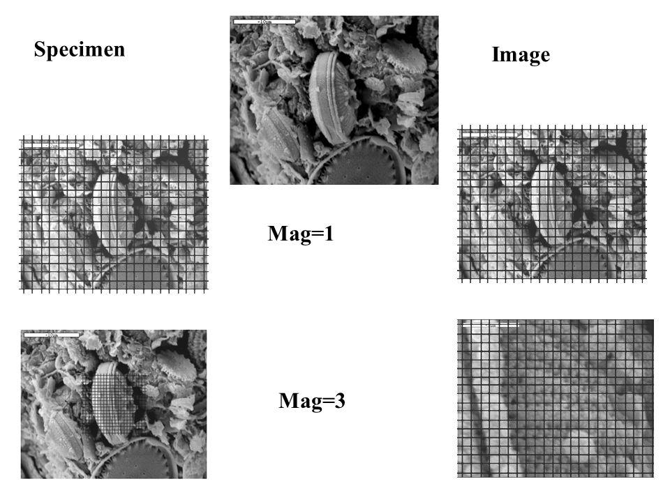Specimen Image Mag=1 Mag=3