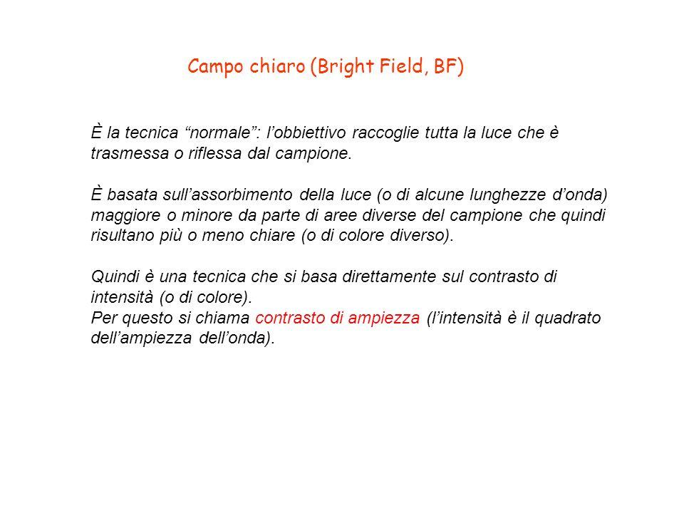 Campo chiaro (Bright Field, BF)