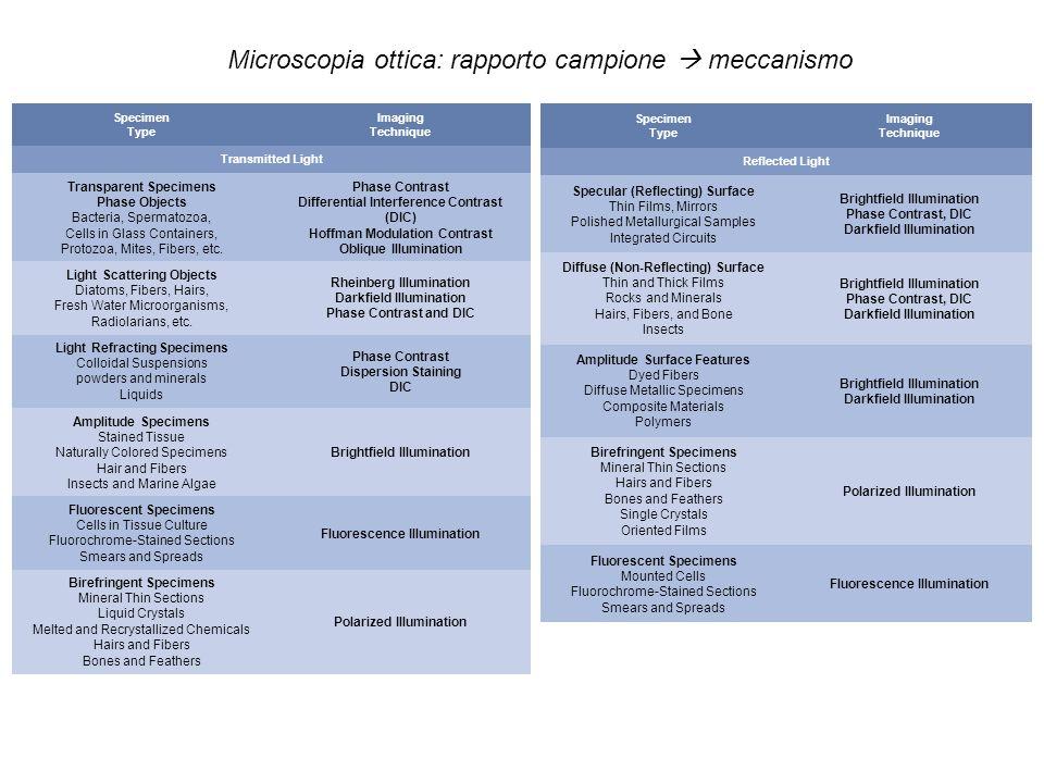 Microscopia ottica: rapporto campione  meccanismo