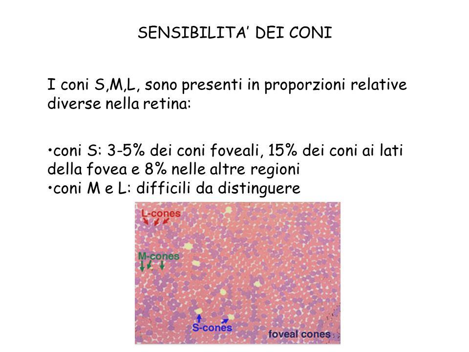 SENSIBILITA' DEI CONI I coni S,M,L, sono presenti in proporzioni relative diverse nella retina:
