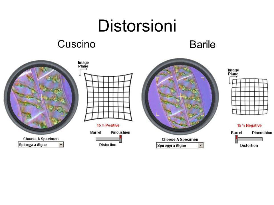 Distorsioni Cuscino Barile