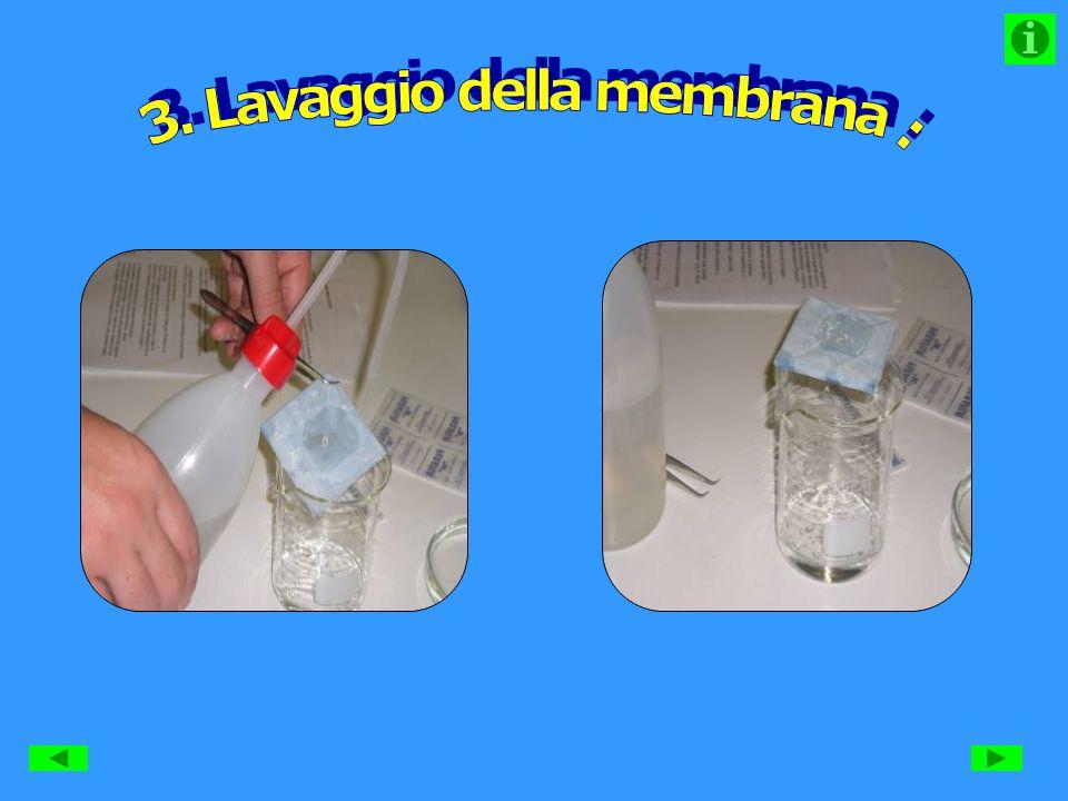 3. Lavaggio della membrana :