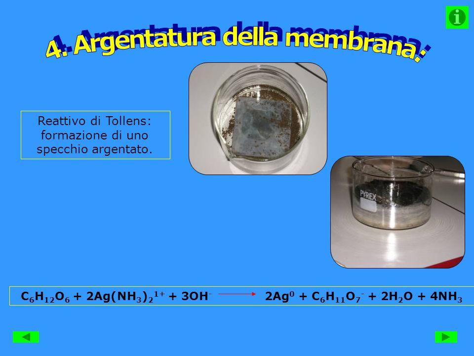 4. Argentatura della membrana: