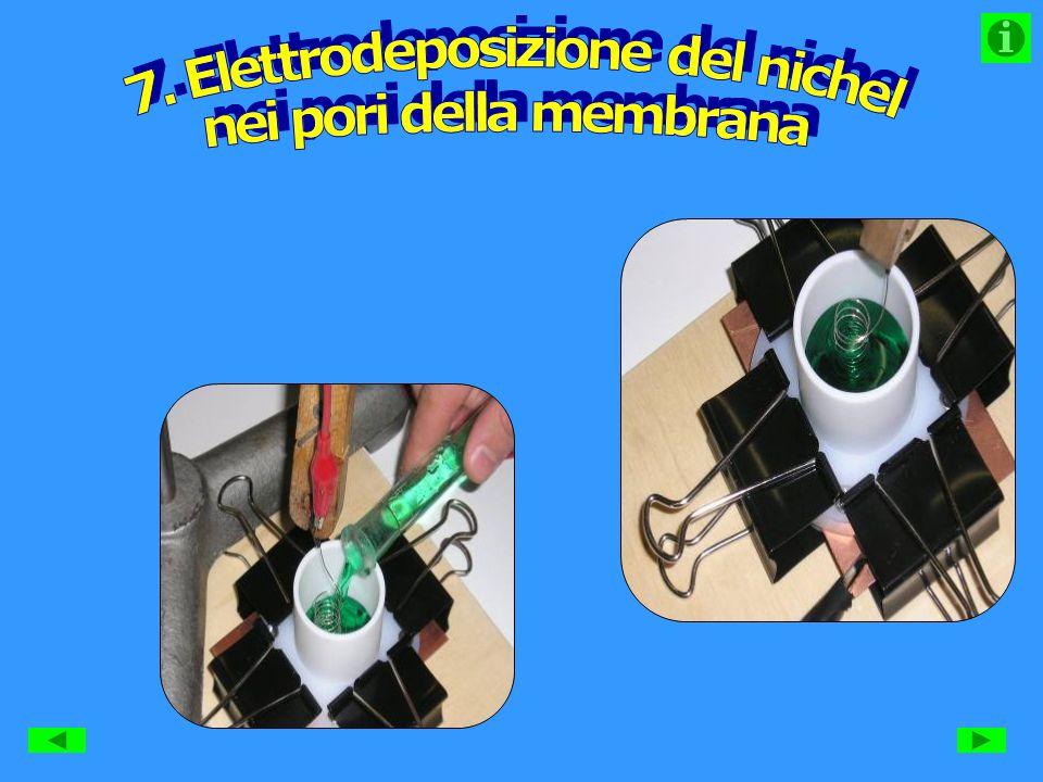 7. Elettrodeposizione del nichel nei pori della membrana