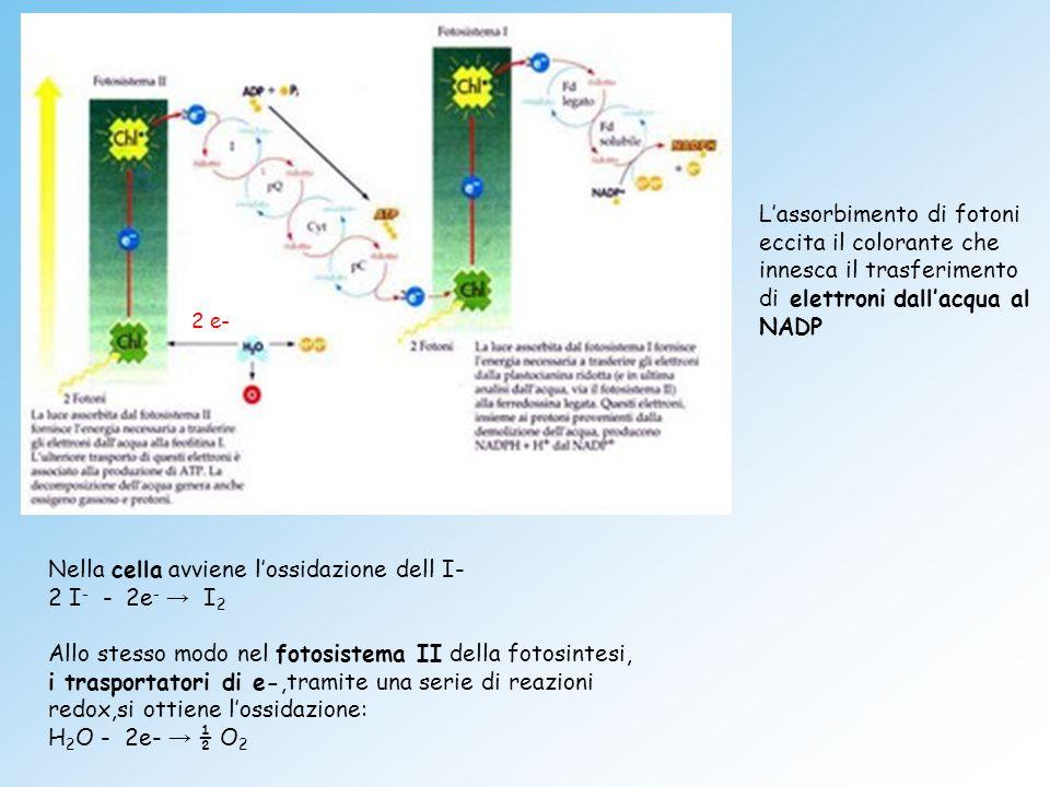 Nella cella avviene l'ossidazione dell I- 2 I- - 2e‑ → I2