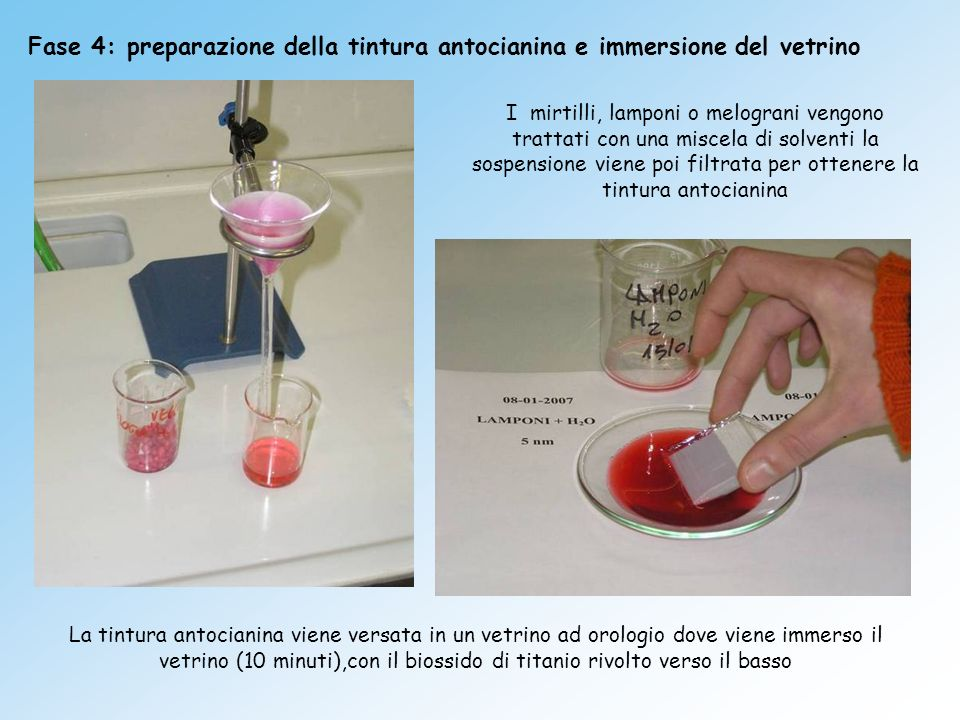 Fase 4: preparazione della tintura antocianina e immersione del vetrino