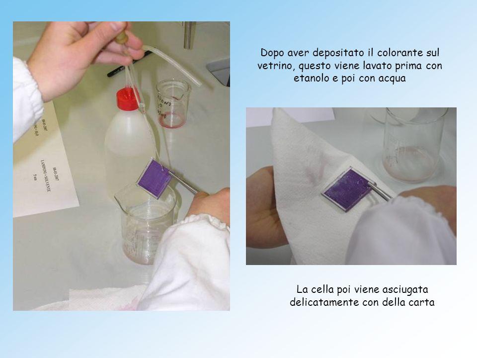 La cella poi viene asciugata delicatamente con della carta
