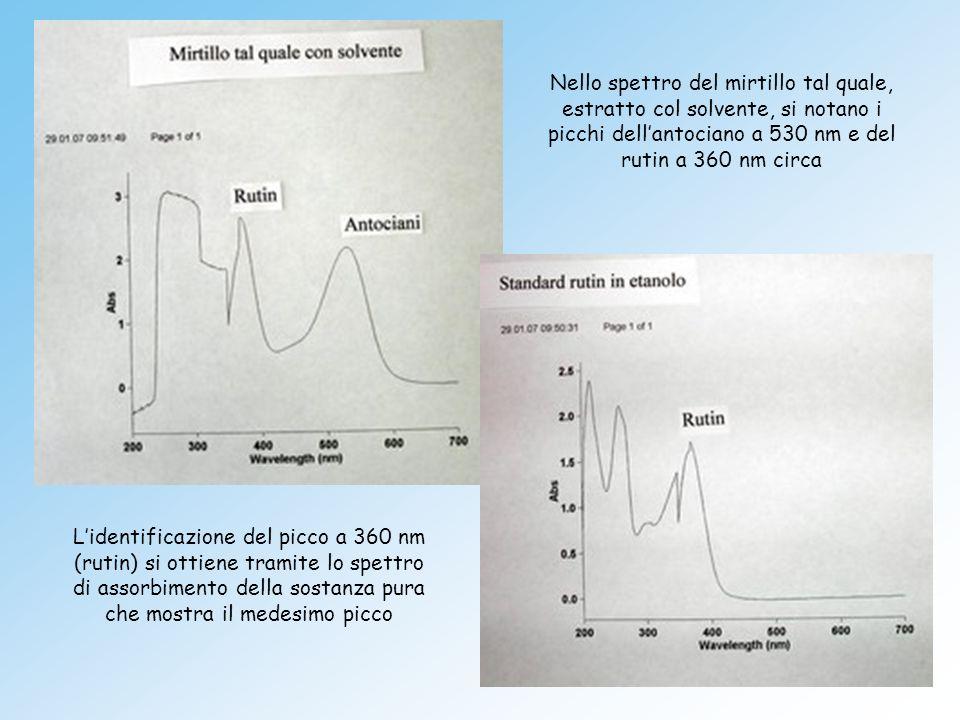 Nello spettro del mirtillo tal quale, estratto col solvente, si notano i picchi dell'antociano a 530 nm e del rutin a 360 nm circa