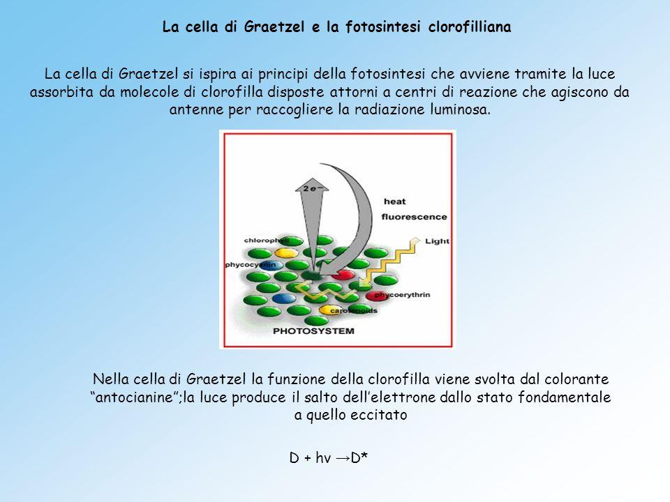 La cella di Graetzel e la fotosintesi clorofilliana