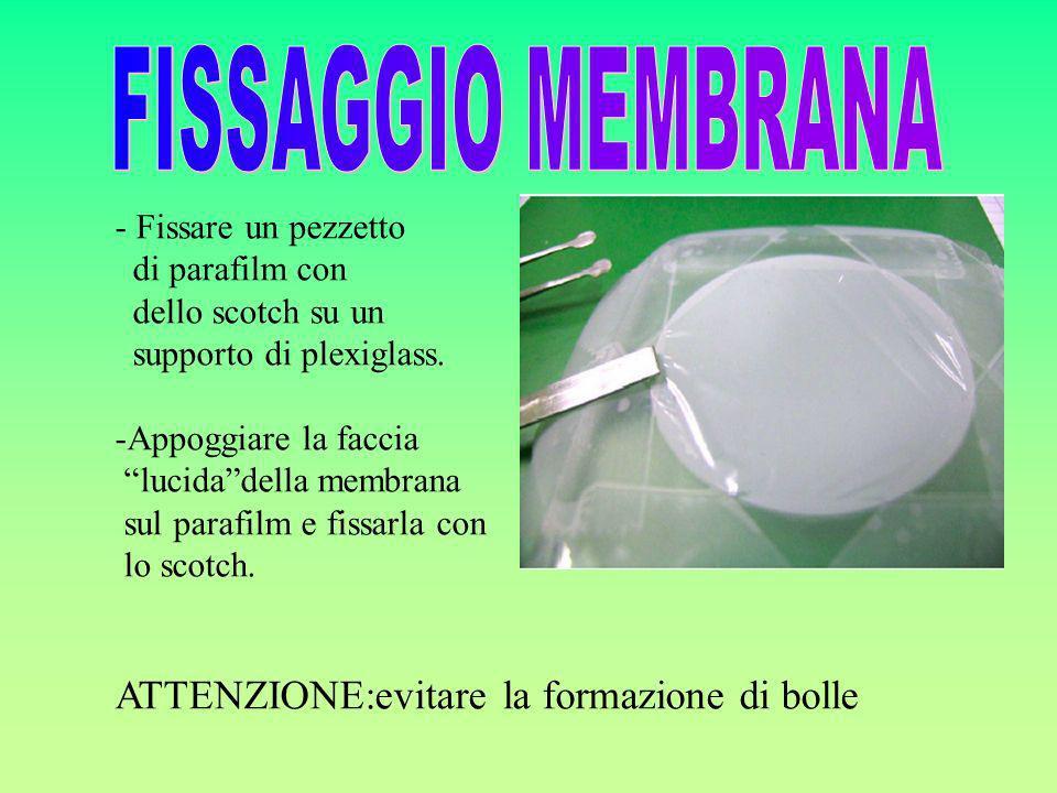 FISSAGGIO MEMBRANA ATTENZIONE:evitare la formazione di bolle