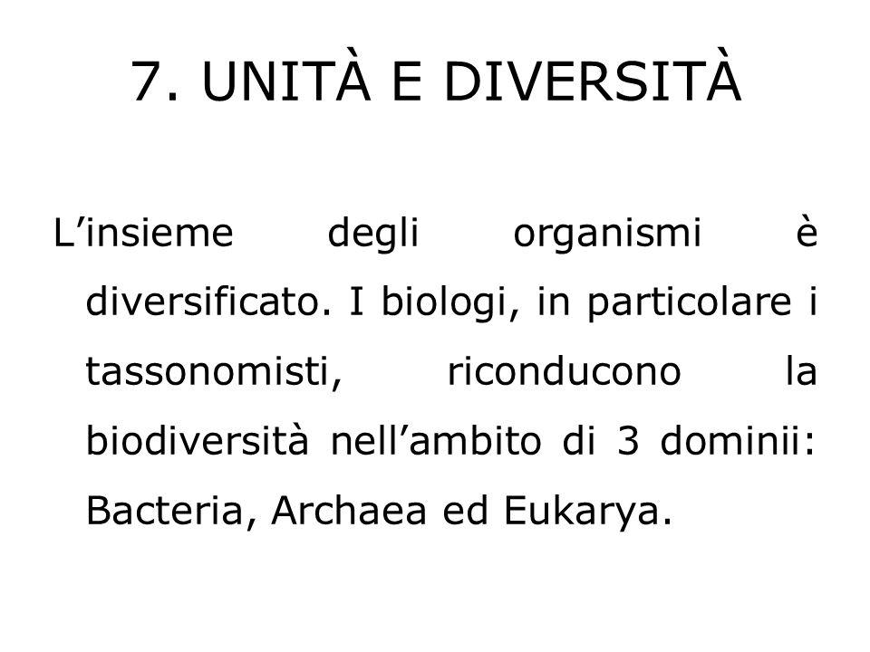 7. UNITÀ E DIVERSITÀ