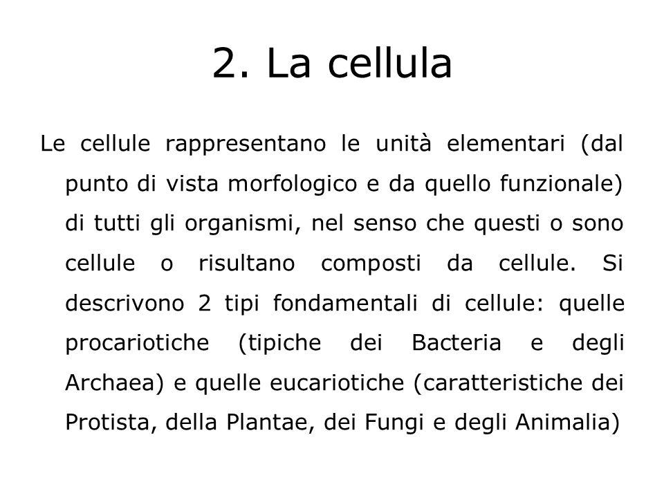 2. La cellula