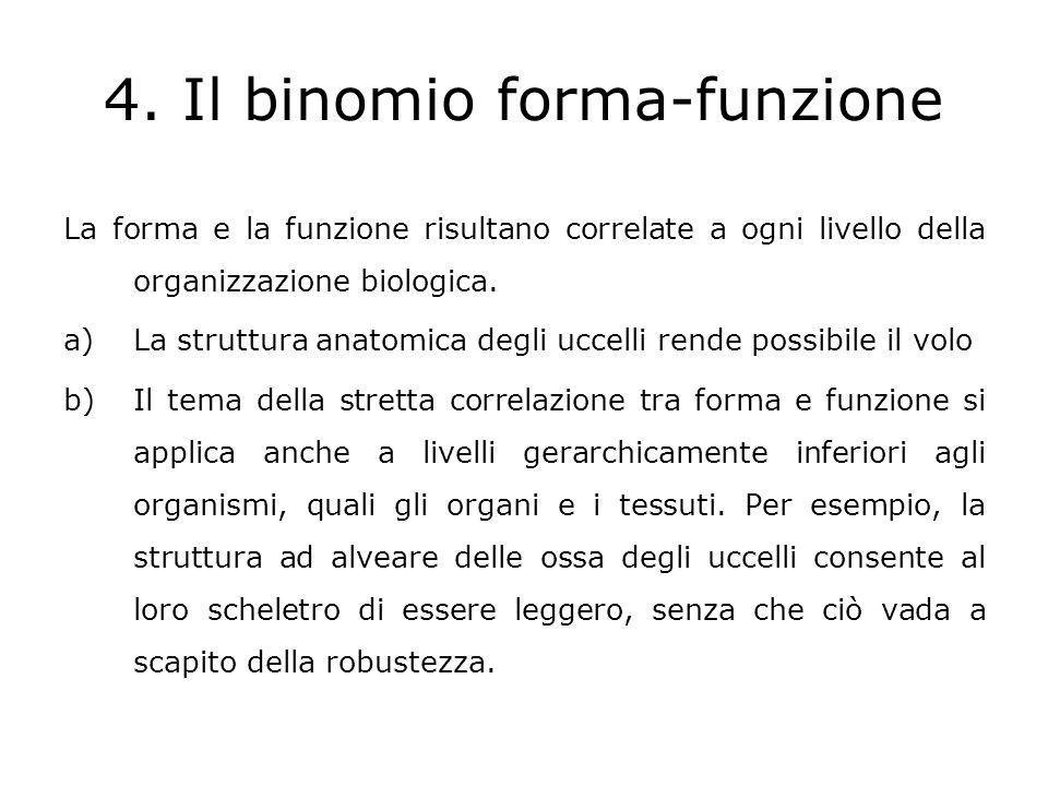 4. Il binomio forma-funzione