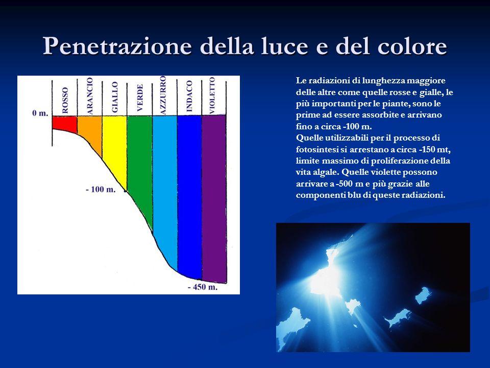 Penetrazione della luce e del colore