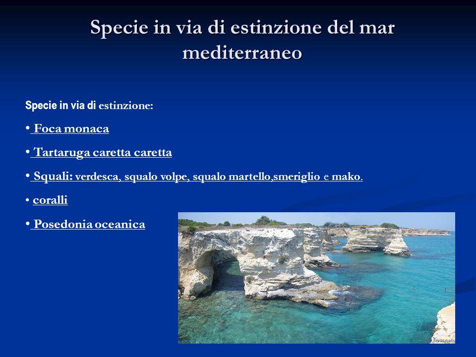 Specie in via di estinzione del mar mediterraneo