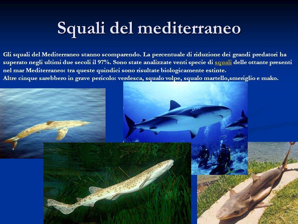 Squali del mediterraneo
