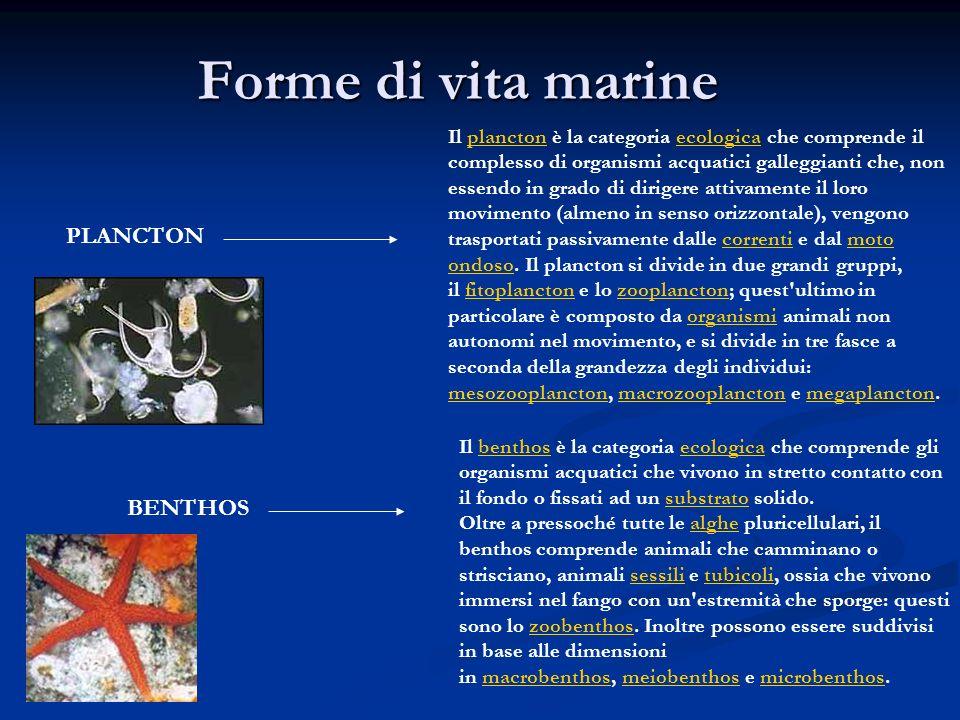 Forme di vita marine PLANCTON BENTHOS
