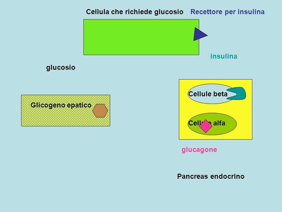 Cellula che richiede glucosio