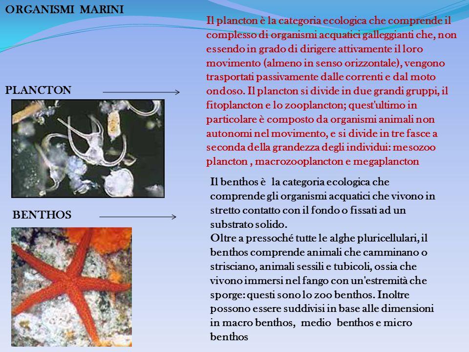 ORGANISMI MARINI