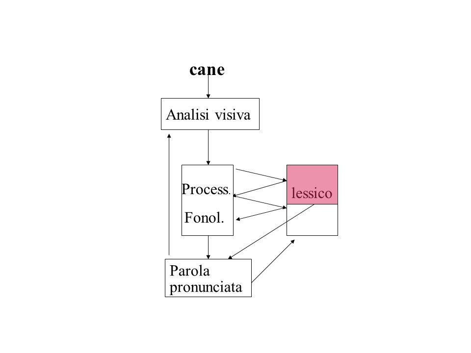 Analisi visiva Process. Fonol. Parola pronunciata cane lessico