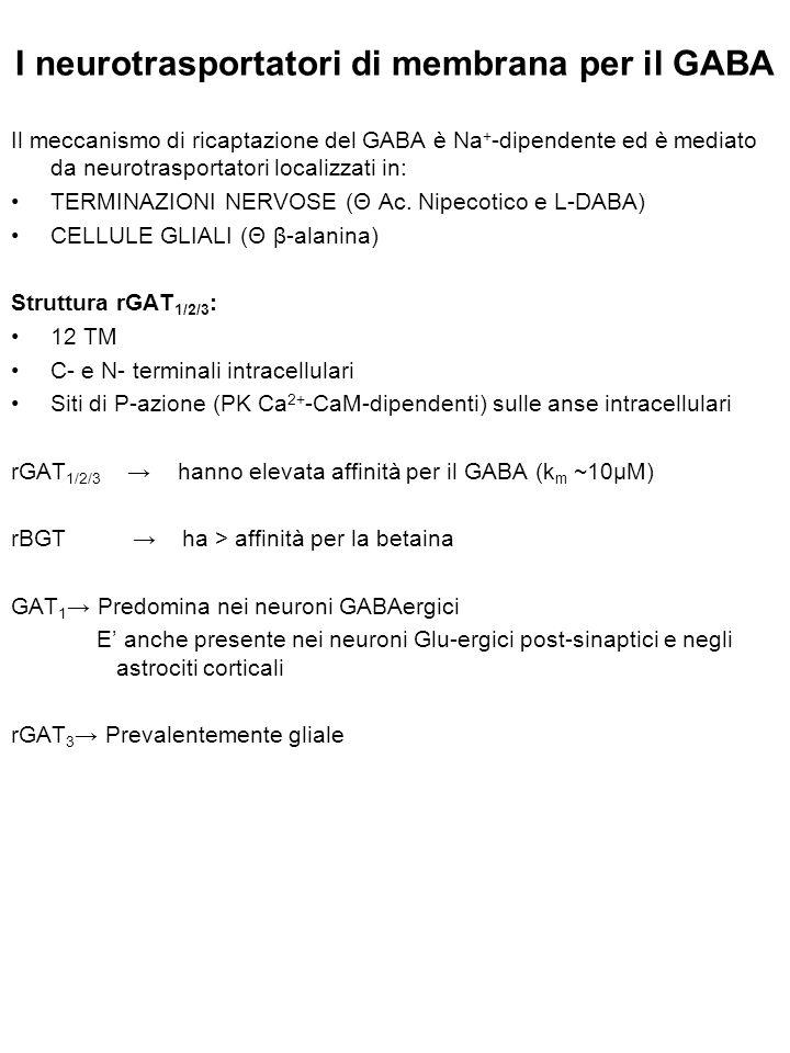I neurotrasportatori di membrana per il GABA
