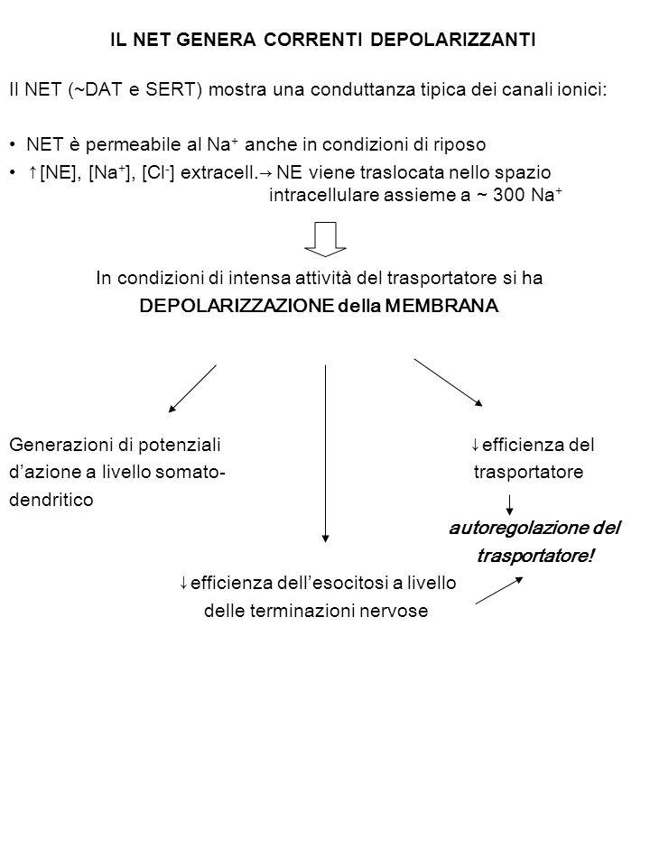 IL NET GENERA CORRENTI DEPOLARIZZANTI