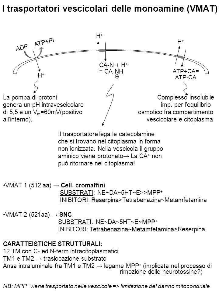 I trasportatori vescicolari delle monoamine (VMAT)