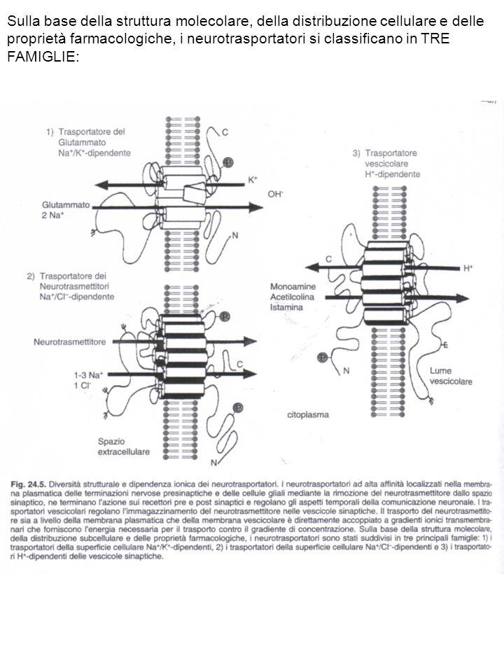 Sulla base della struttura molecolare, della distribuzione cellulare e delle proprietà farmacologiche, i neurotrasportatori si classificano in TRE FAMIGLIE: