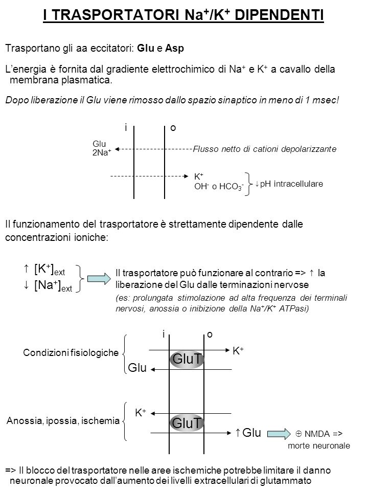 I TRASPORTATORI Na+/K+ DIPENDENTI