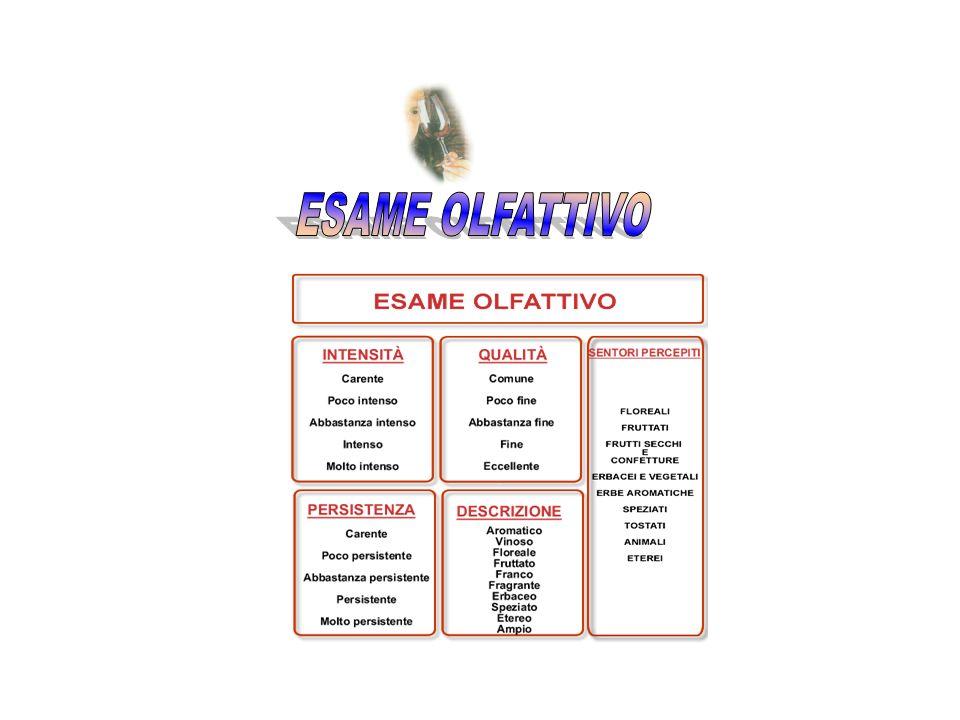ESAME OLFATTIVO