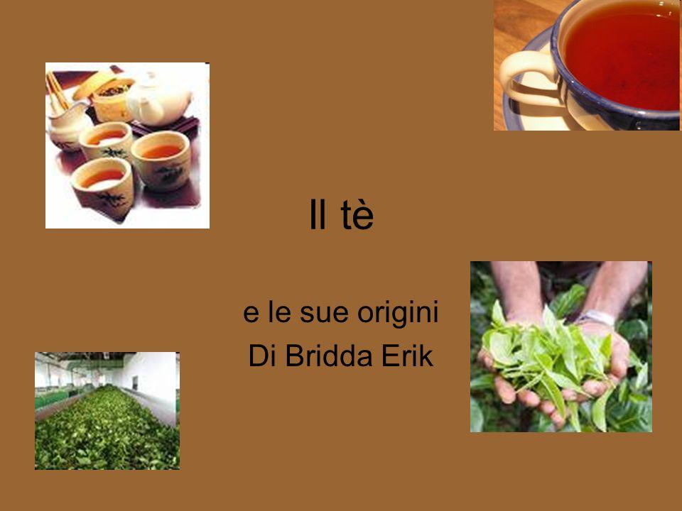 e le sue origini Di Bridda Erik