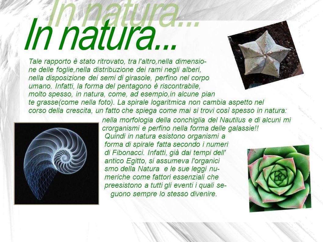In natura... Tale rapporto è stato ritrovato, tra l altro,nella dimensio- ne delle foglie,nella distribuzione dei rami negli alberi,