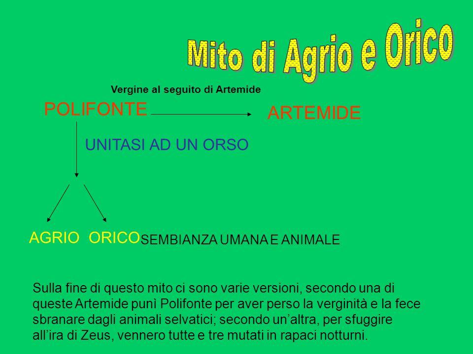 Mito di Agrio e Orico POLIFONTE ARTEMIDE UNITASI AD UN ORSO AGRIO